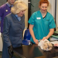 HRH Duchess of Cornwall looking at a cat held by member of staff