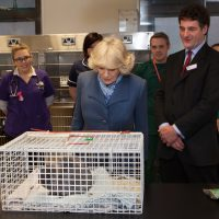HRH Duchess of Cornwall looking at a cat in a cage