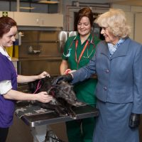 HRH Duchess of Cornwall with canine patient