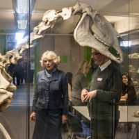 HRH Duchess of Cornwall looking at a horse skeleton